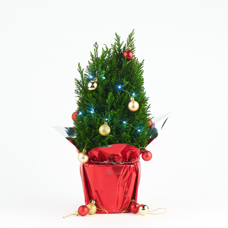 Coastal Nursery Holiday 2019 Christmas Tree