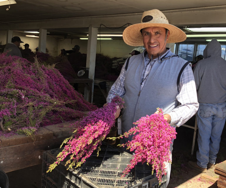 Juan Alonso With Boronia